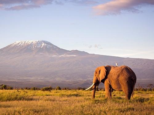 zimmer-rohde-destinations-wildlife